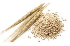 Пшеница несоложеная